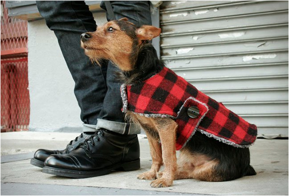 billy-wolf-dog-jackets-2.jpg | Image