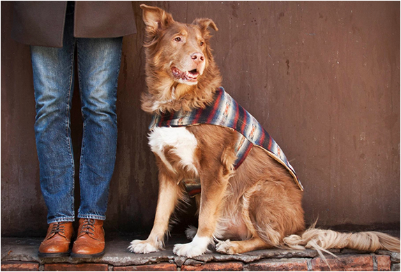 Billy Wolf | Handcrafted Dog Jackets | Image