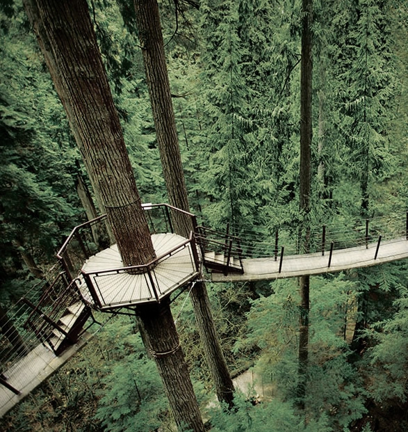 capilano-suspension-bridge-park-14.jpg