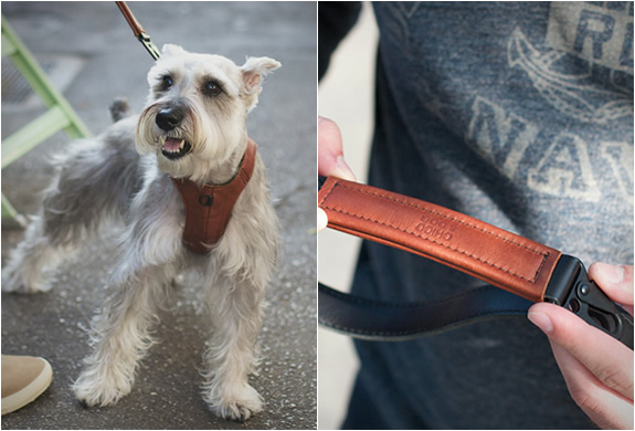 Chico And Dog | Stylish Dog Products | Image