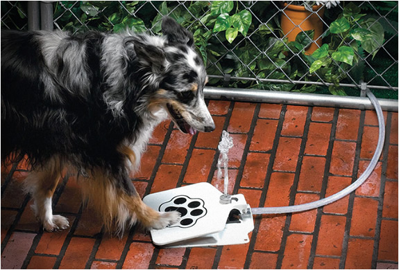 Doggie Fountain | Image