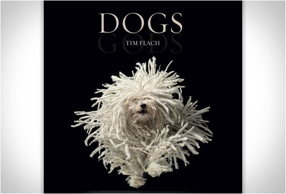 Dogs Gods | By Tim Flach | Image