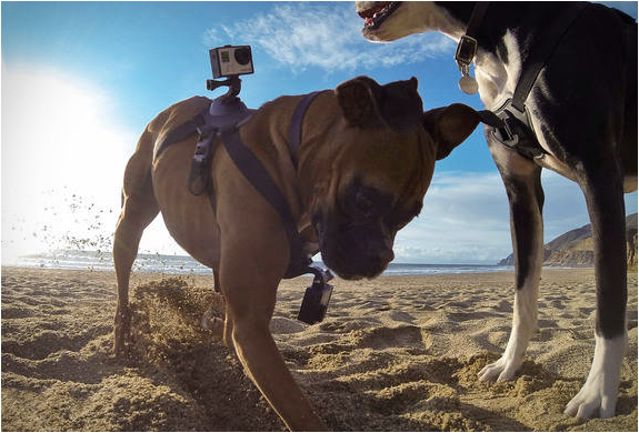 gopro-fetch-2.jpg | Image