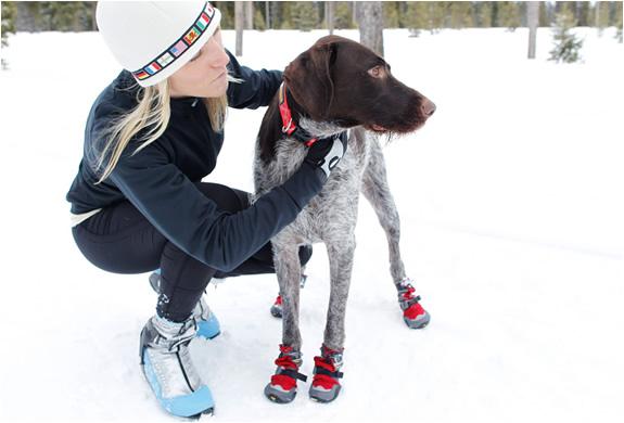 img_dog_polar_trex_boots_5.jpg