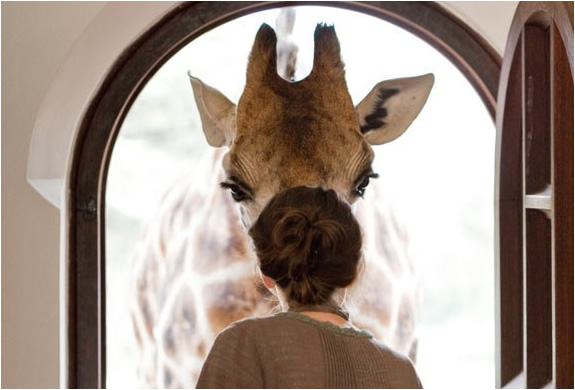 THE AMAZING GIRAFFE MANOR | NAIROBI AFRICA | Image