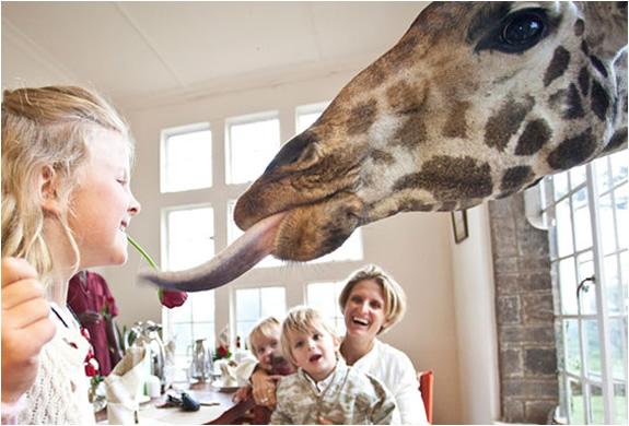 img_giraffe_manor_nairobi_5.jpg