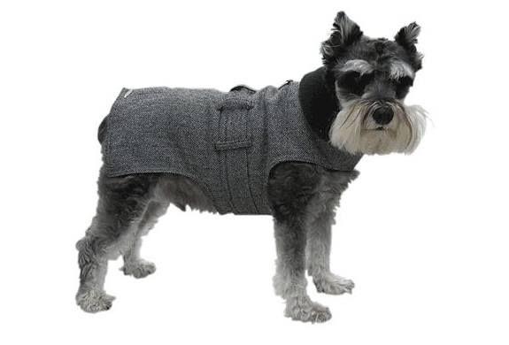img_wall_street_dog_trench_coat_2.jpg | Image
