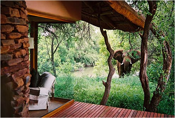 makanyane-safari-lodge-2.jpg