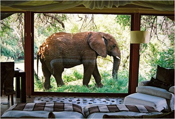 MAKANYANE SAFARI LODGE | SOUTH AFRICA | Image