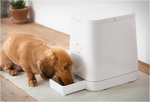 Petly | Automatic Pet Feeder | Image
