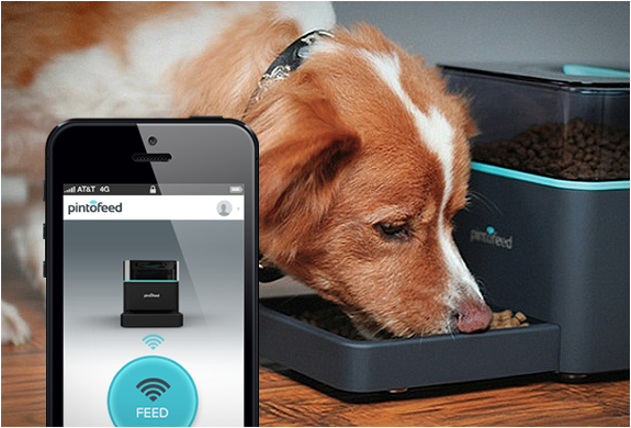 Pintofeed | Automatic Pet Feeder | Image