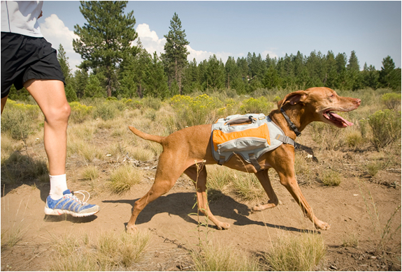 ruffwear-dog-packs-2.jpg