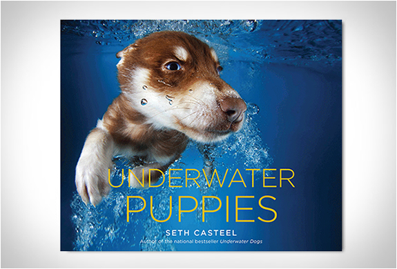 UNDERWATER PUPPIES | BY SETH CASTEEL | Image
