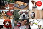 GIFT IDEAS | DOG LOVER
