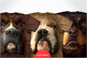 HYPER REALISTIC DOG FACE T-SHIRTS