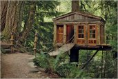 thum_tree-house-point.jpg