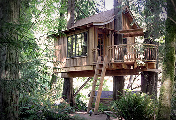 tree-house-point-5.jpg | Image