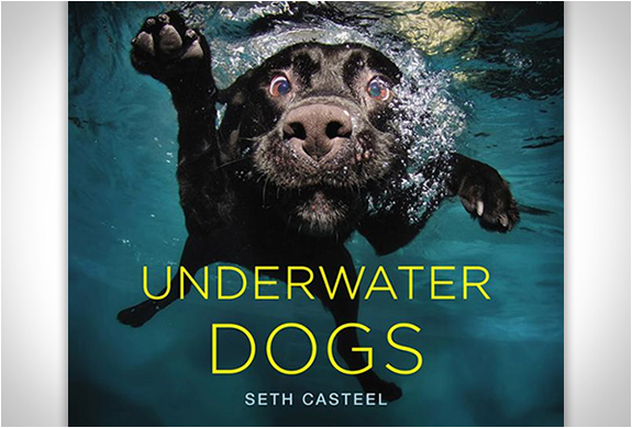 Underwater Dogs | By Seth Casteel | Image