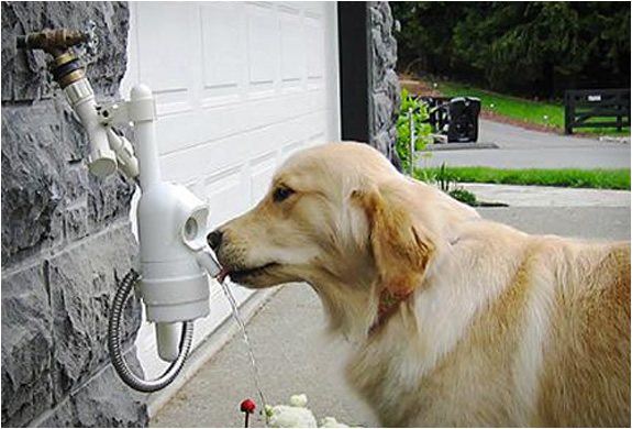 waterdog-automatic-pet-drinking-fountain-2.jpg | Image