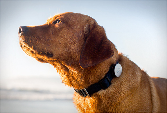 WHISTLE | DOG ACTIVITY MONITOR | Image